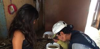 Sistema de ovitrampas para control del dengue