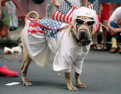 La estrategia de los perritos electorales.