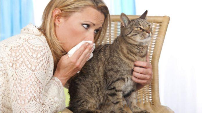 alergia-mascota-gato