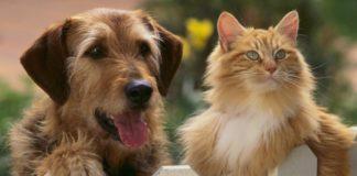 perros-gatos-mascotas-nota