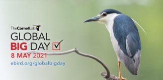 Global Big Day 2021: Perú es destino privilegiado en el mundo para la observación de aves