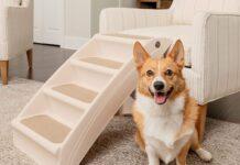 ¿Cómo limpiar tu casa si vives con mascotas?