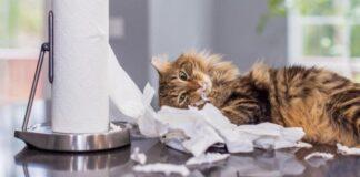 ¿Tienes un gato rebelde? Evita estas regañinas para educarlo mejor